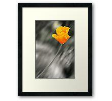 Orange Poppy in the Wind Framed Print