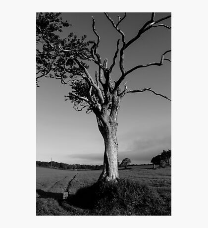Ageing Gracefully Photographic Print