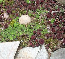 Succulents Bed by porksofpig