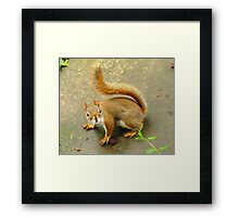 Scene From A Medieval Tapestry ~ With Red Squirrel Framed Print