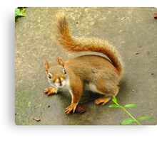 Scene From A Medieval Tapestry ~ With Red Squirrel Canvas Print