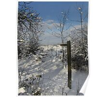 Snowy Woodland Path Poster