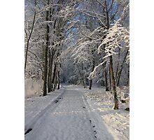 Snowy Woodland Scene Photographic Print
