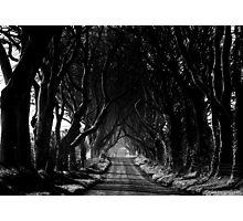 The Dark Hedges Photographic Print