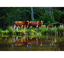 The Herd Photographic Print