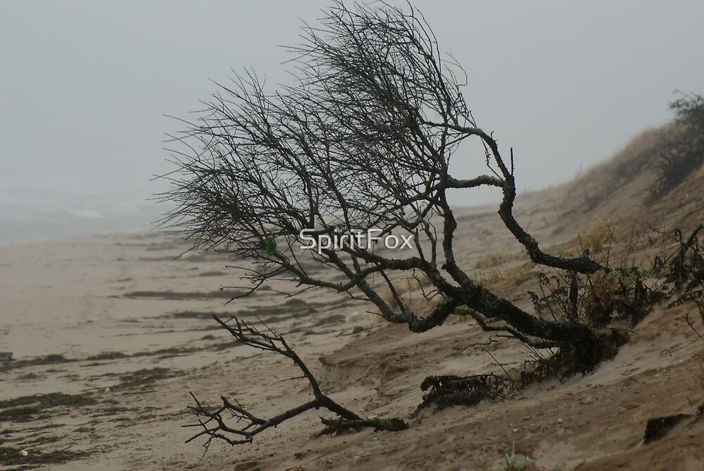 Barren Beach by SpiritFox
