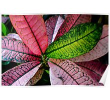 Colorful Abstract Botantical Leaves Photography Poster