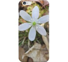Hepatica in the Woods iPhone Case/Skin