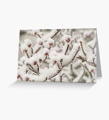 Dressed in Snow Greeting Card