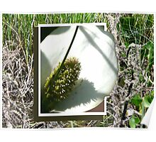 Wild Cala Lily,... Breaking Free Poster