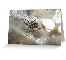 Black Widow showing Bow Tie Greeting Card