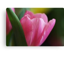 Perfectly Pink Canvas Print