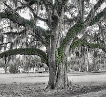 Live Oak by Scott Hansen