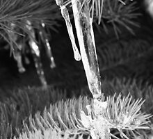 Icy Trees 1 by Casey Voss