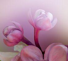 Lilac florets  by sunshine65