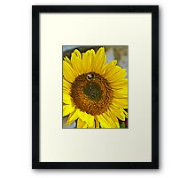 Dont Worry Bee happy! Framed Print