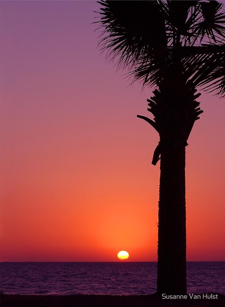 Sunset Palm by Susanne Van Hulst