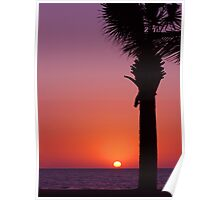 Sunset Palm Poster
