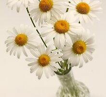 daisies in vase by OldaSimek