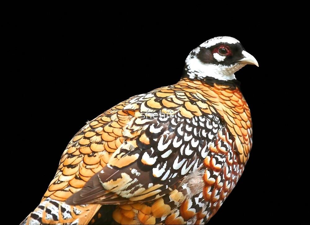 Bird by snehit