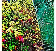 Web Spectrum Photographic Print