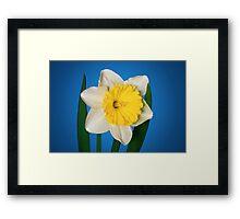 Daffodil Delight Framed Print