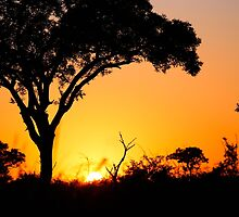 African Sunrise  by lallymac