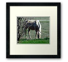 Casual Lunch Framed Print