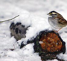 Snow Sparrow by Lisa G. Putman