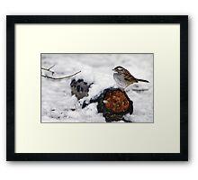 Snow Sparrow Framed Print