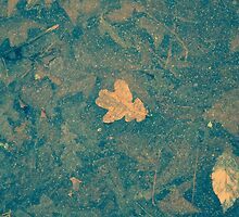 Leaf on ice by Robyn Liebenberg