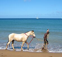 Horse In The Surf - St. Lucia by Memaa
