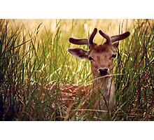 The Deer  Photographic Print