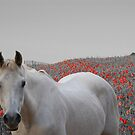 Poppy field by FelicityB