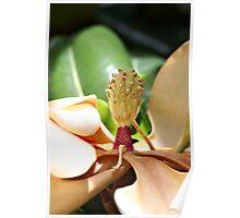 Death of a magnolia Poster