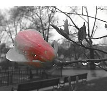 Wet Dreams Photographic Print