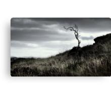 A bare tree at Tamnyrankin - Co. Londonderry Canvas Print