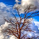 Granite Dells Tree by Kgphotographics
