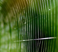 Web Of The Orb Weaver by LinneaJean