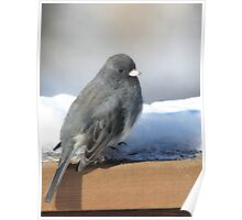 Dark Eyed Junco on the Railing Poster
