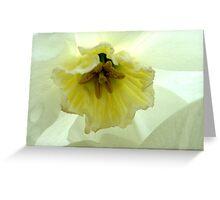 Backlit Yellow Daff  Greeting Card