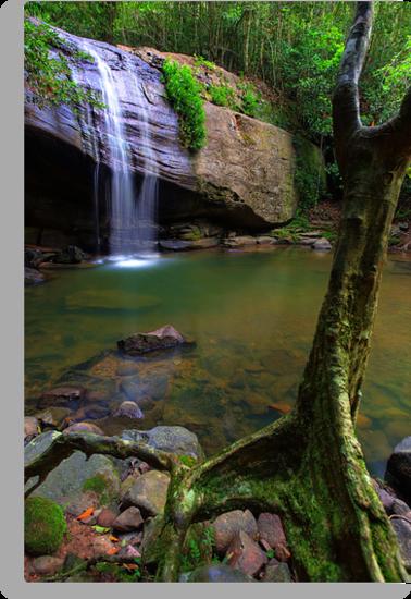 Natural Buderim Falls by Adam Gormley