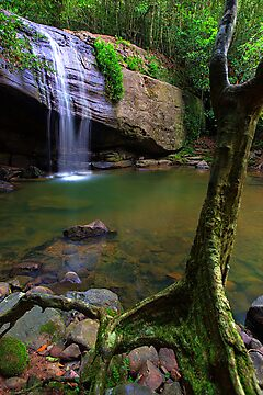 Natural Buderim Falls by Adam Gormley