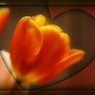 Tulips by elisab