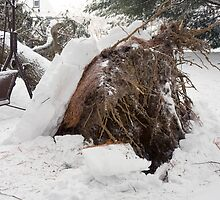 Look What the Storm Did by Trudy Wilkerson