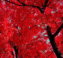 Red Autumn by serendipity3