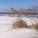 Sea Oats and Surf by kinz4photo