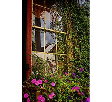 Window Floral Photographic Print
