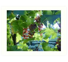French Grapes Art Print