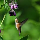 A Hummer of a Summer by DJ LeMay